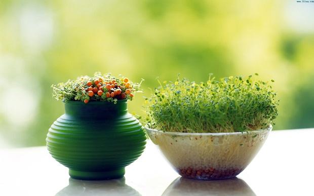 此篇高洁雅文章讲室内空气净化可以摆放的植物,有效减少甲醛,治理甲醛。